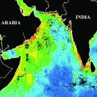 Map of the Arabian Sea showing more phytoplankton (red and green) along the western coasts